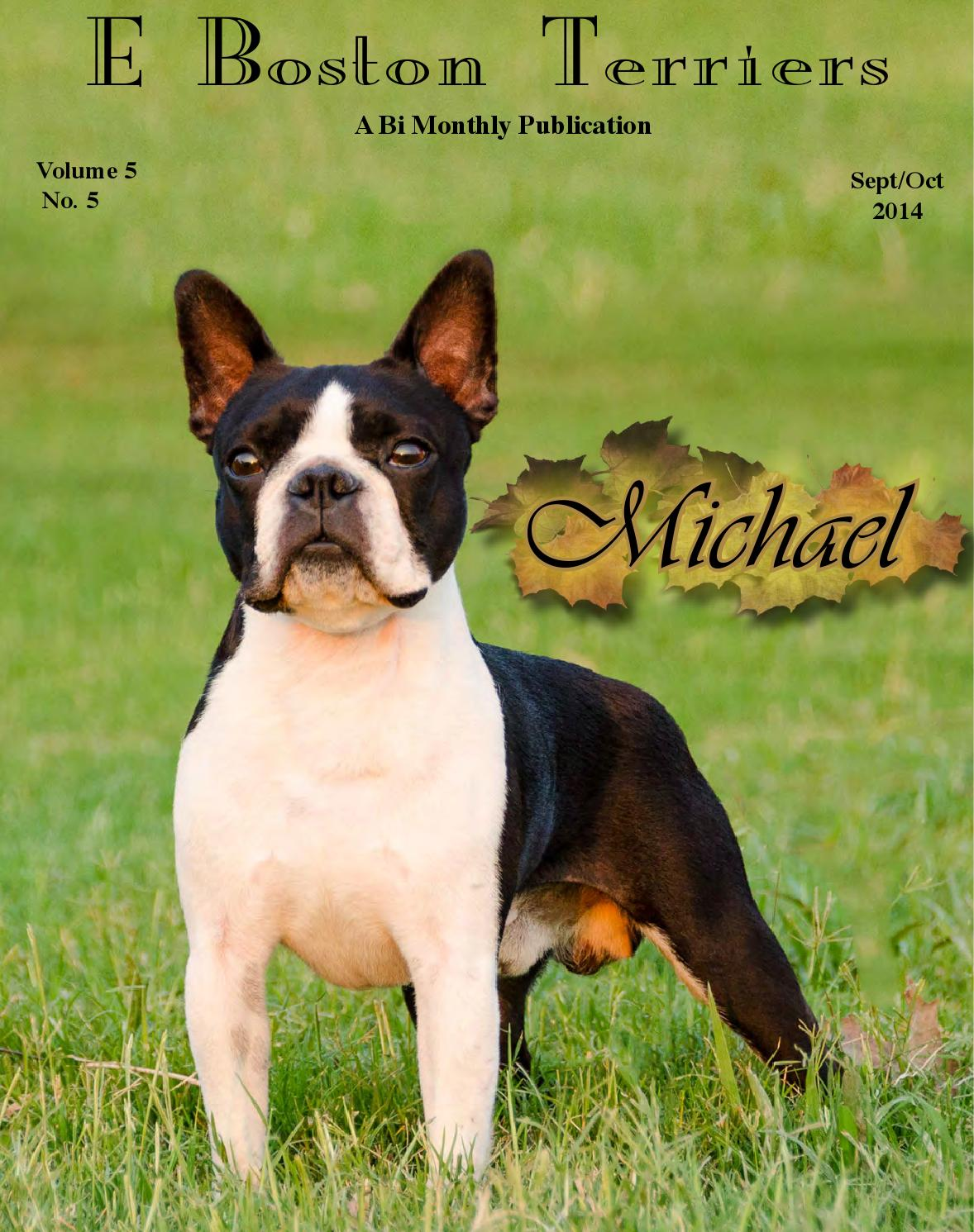 E Boston Terriers Sept Oct Fall 2014 Edition By E Dogmagazines Issuu