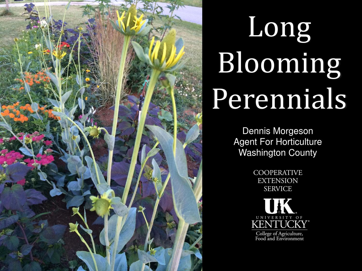 Long Blooming Perennials By Dennis Morgeson Issuu