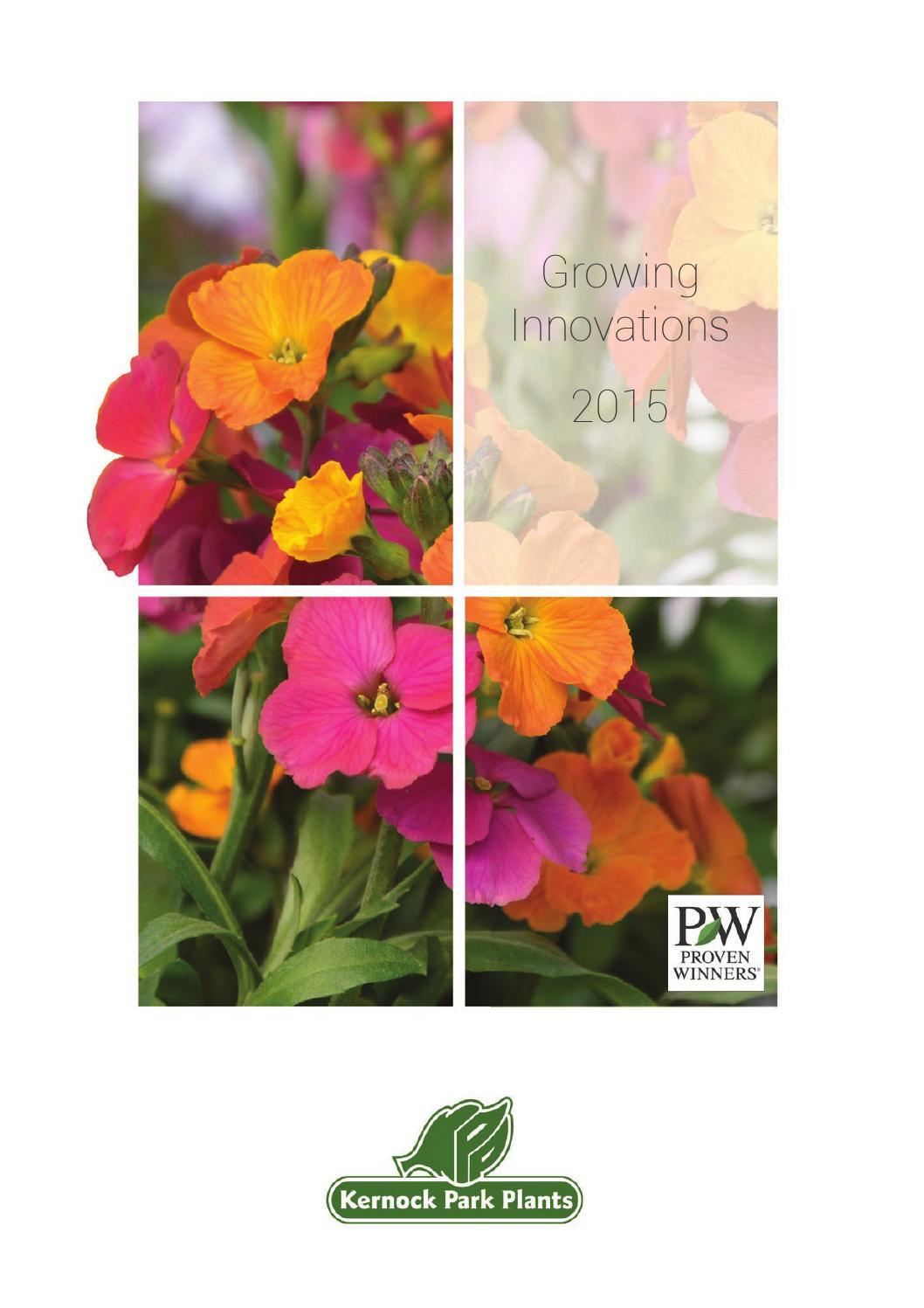 Incl. Pot Myrtus Rainbows Gold Scented Upright Evergreen Flowering Variegated Garden Shrub 20-30cm