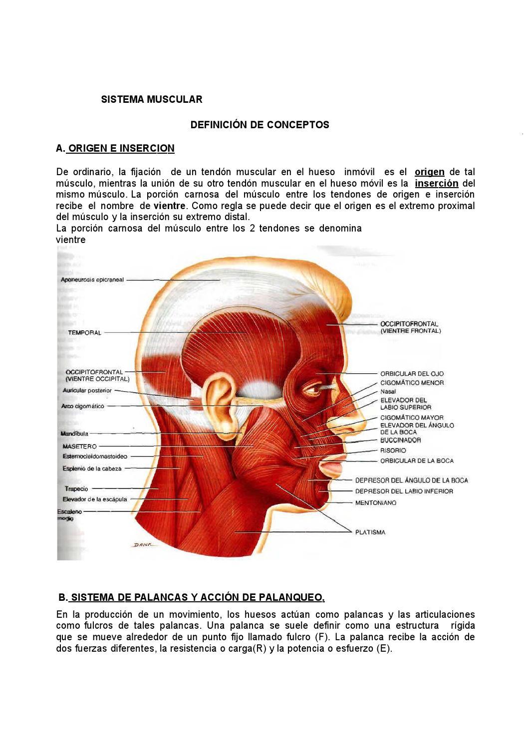 Dorable Definición Anatomía De Origen Viñeta - Imágenes de Anatomía ...
