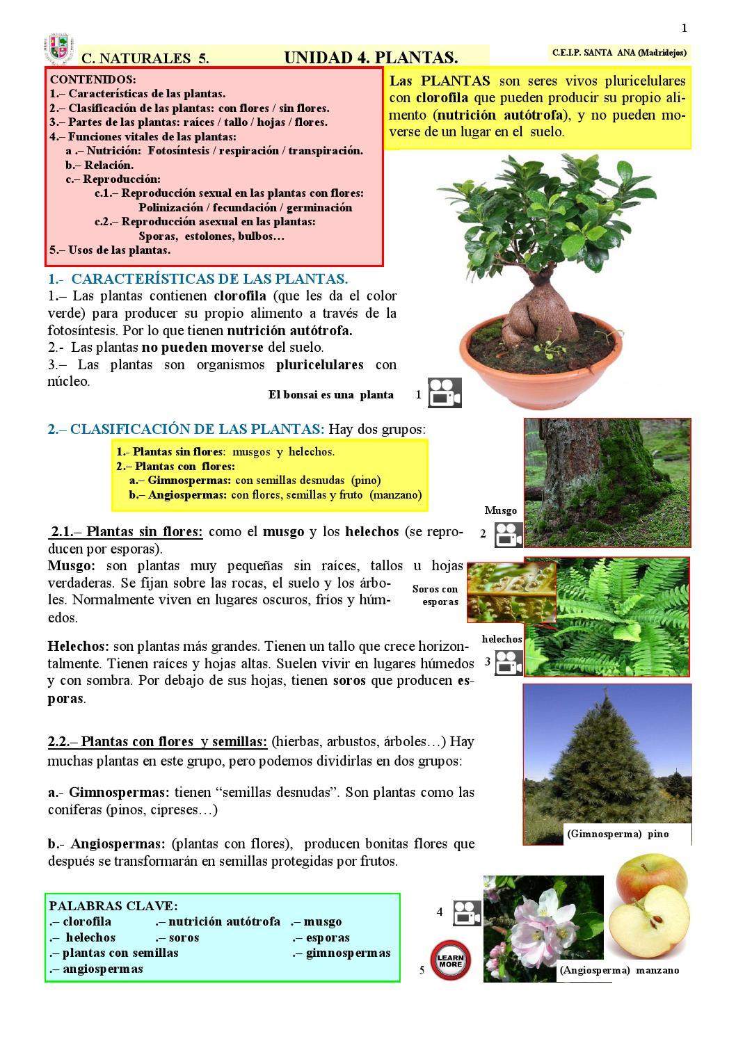Unidad 4 plantas ciencias naturales espa ol by pablo gomez for Marmol caracteristicas y usos