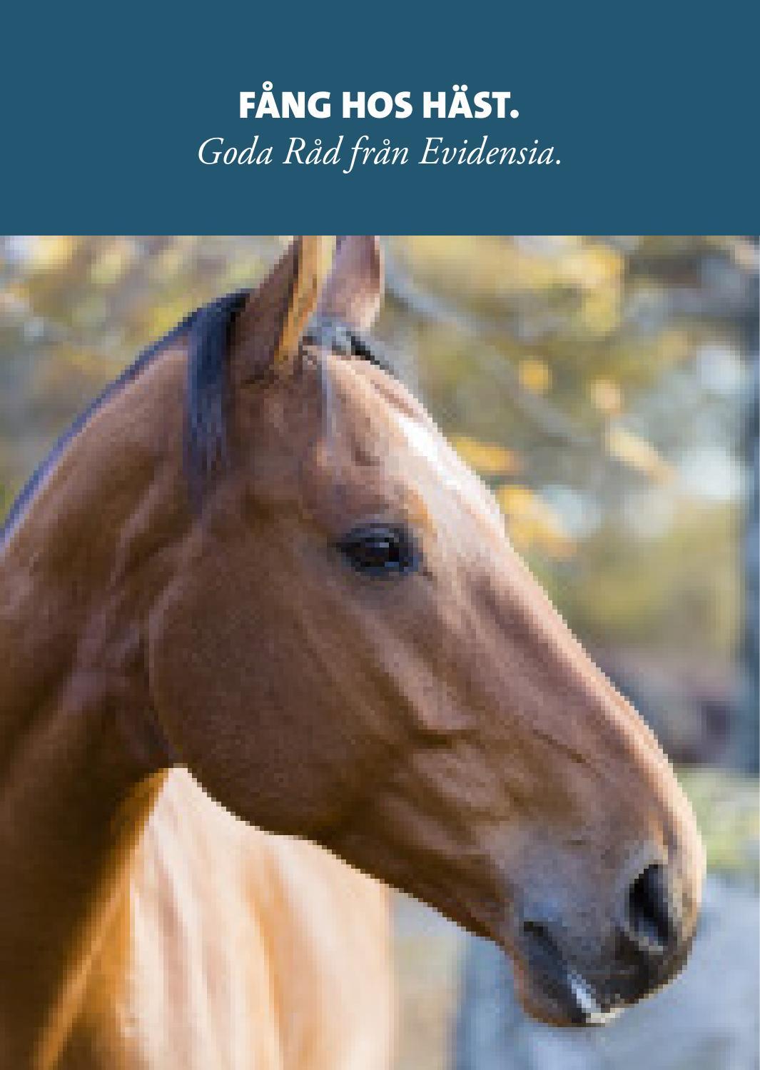 rehabilitering vid fång på häst