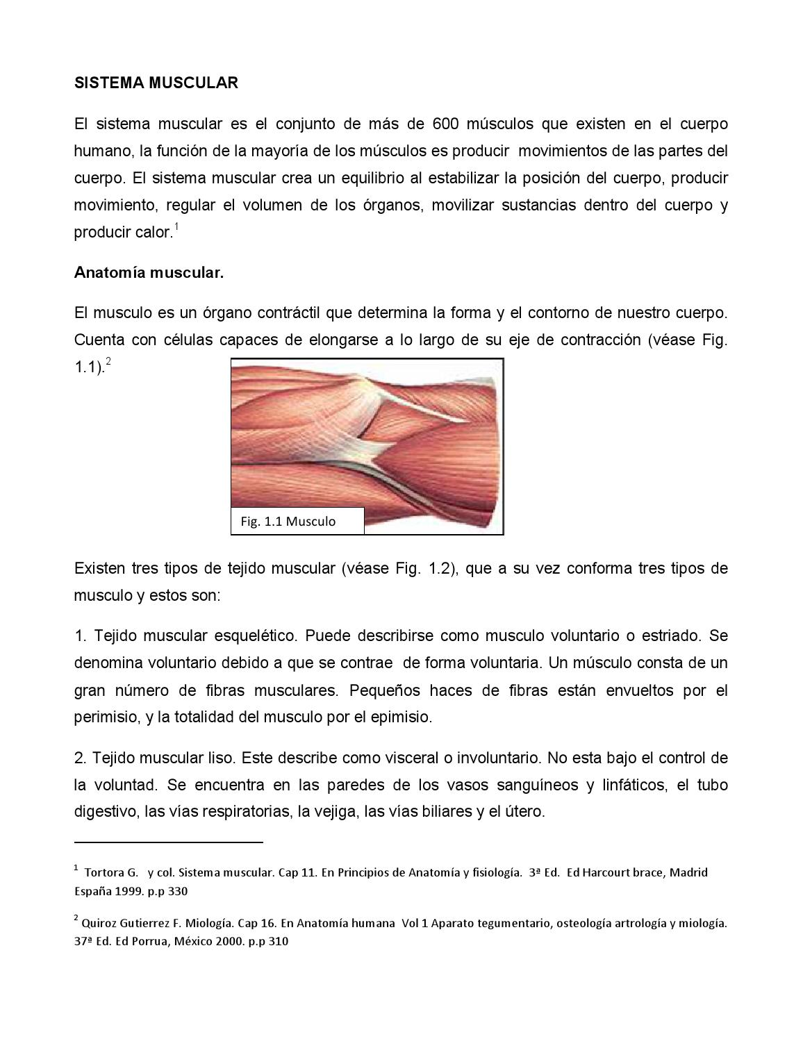 Sistema muscular by nathaly garcia - issuu