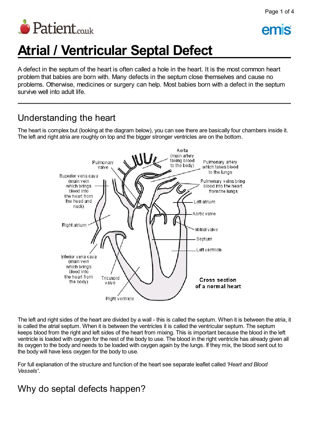 Hole In The Heart By Bethany Patten Issuu