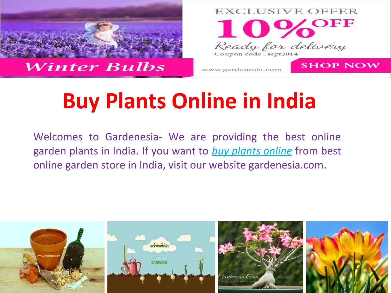 Make Your Garden Beautiful With Gardenesia By Rohitsnghrth Issuu