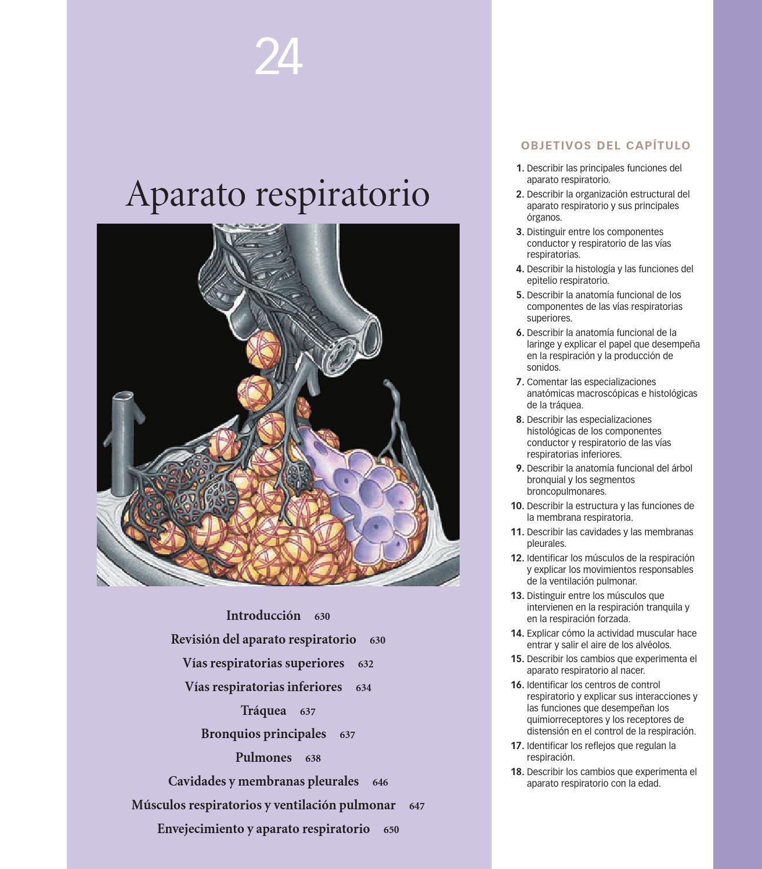ANATOMIA FISIOLOGIA APARATO RESPIRATORIO by Yolanda Salazar - issuu
