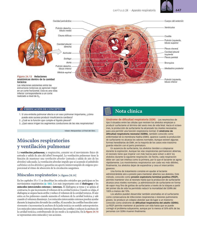 Vistoso Anatomía Y Fisiología Become Capítulo 3 Bandera - Anatomía ...