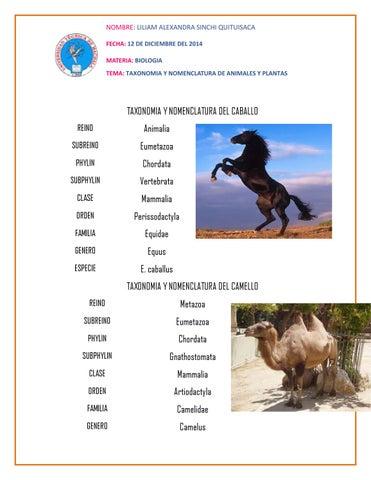 taxonomia y nomenclatura de animales y plantas by liliam