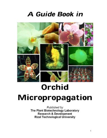 A Guidebook In Orchid Micropropagation By Marco Acuna