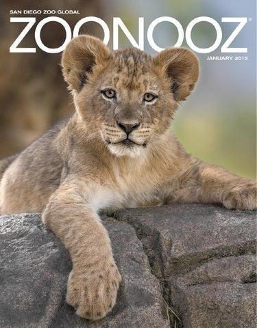Zoonooz January 2015 By San Diego Zoo Global Issuu