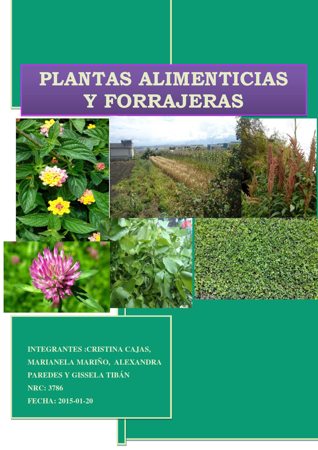 Plantas alimenticias y forrajeras by kelka issuu for Plantas medicinales y ornamentales