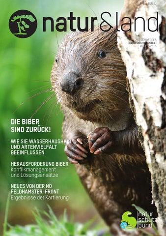 Natur Land 3 2013 Die Biber Sind Zuruck By L Naturschutzbund L