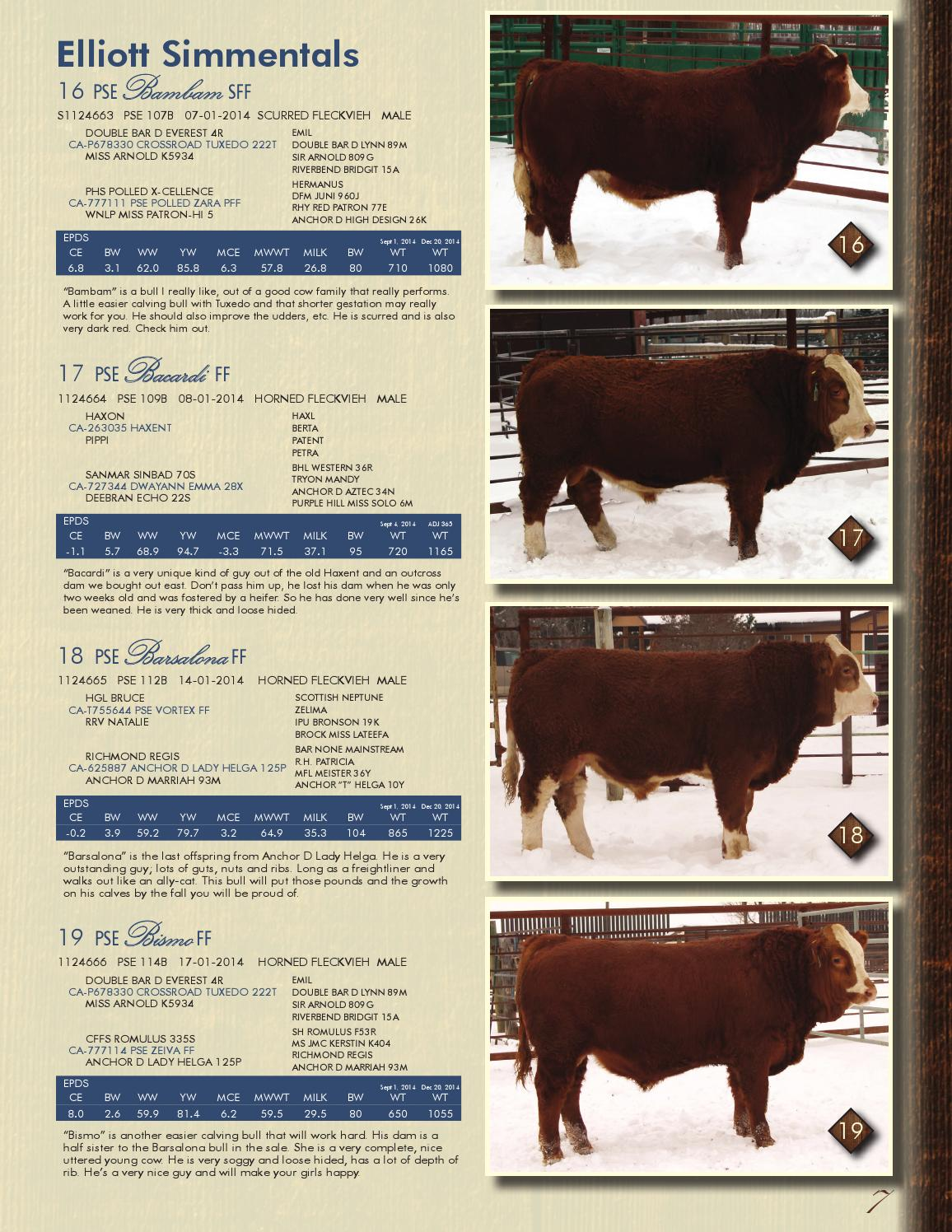 Jeans & Genetics Simmental Bull Sale, 2015 by Today's Publishing Inc