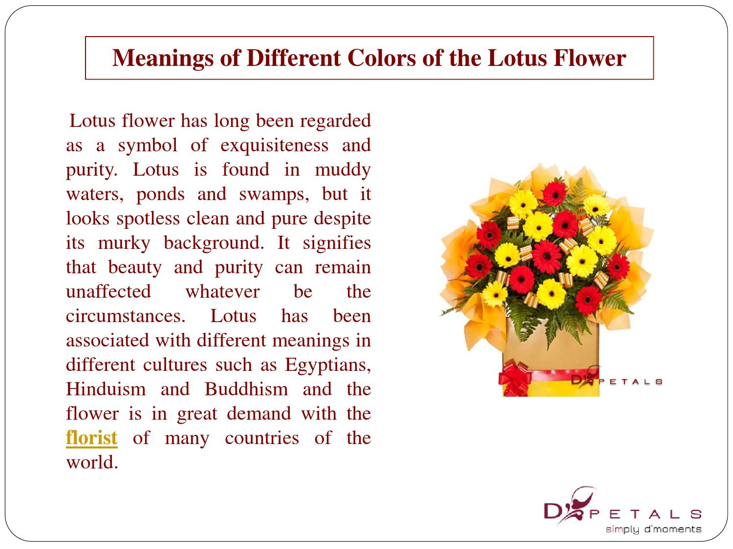 Meanings of different colors of the lotus flower by addy smith issuu izmirmasajfo