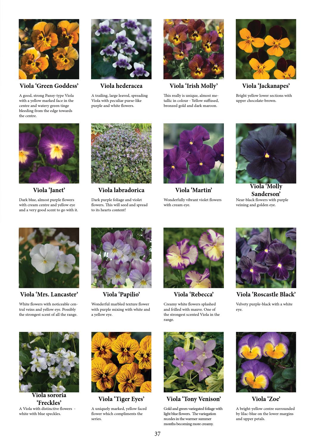Spring Fling Ideas Book by Kernock Park Plants , issuu