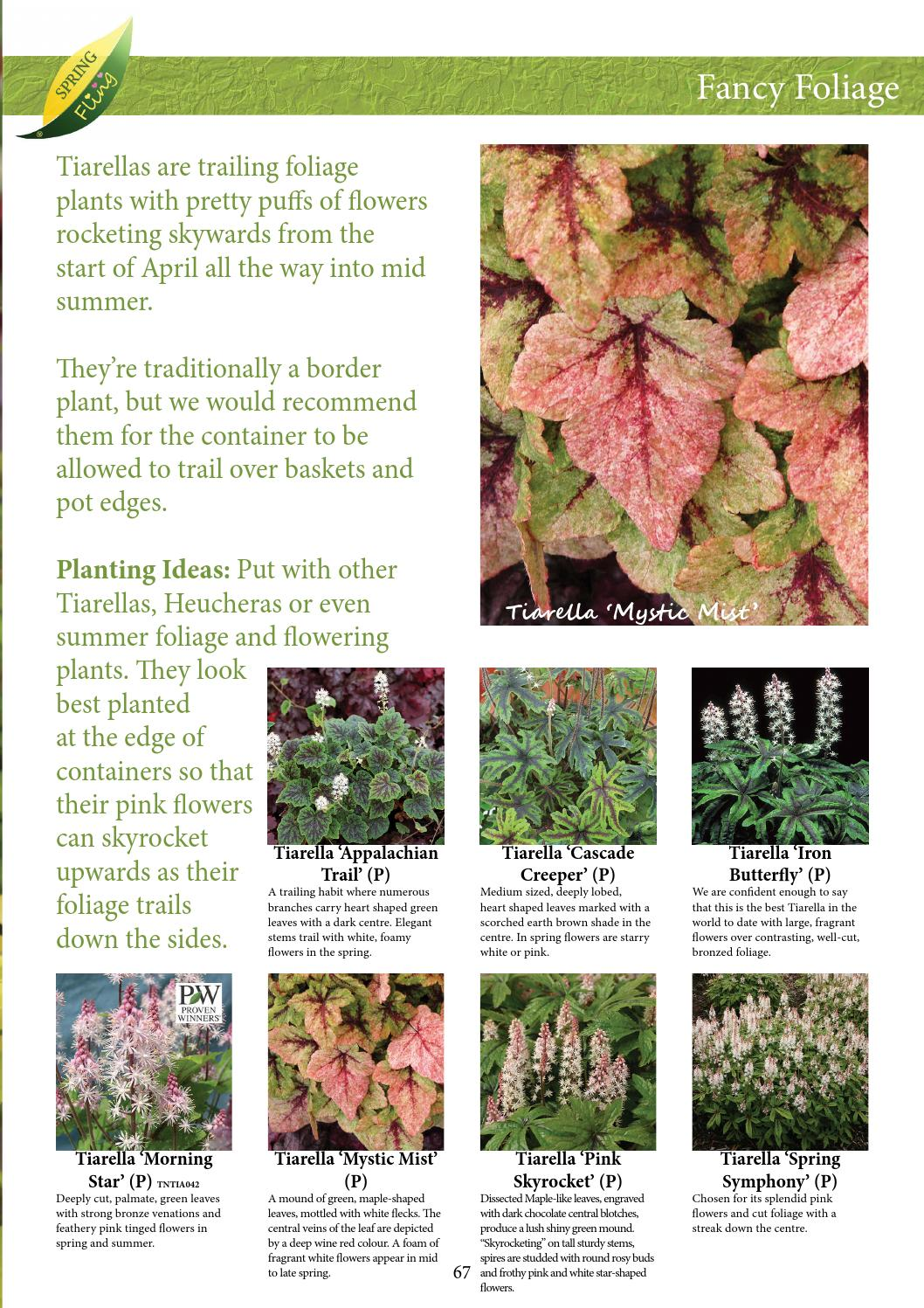 Spring Fling Ideas Book By Kernock Park Plants Issuu