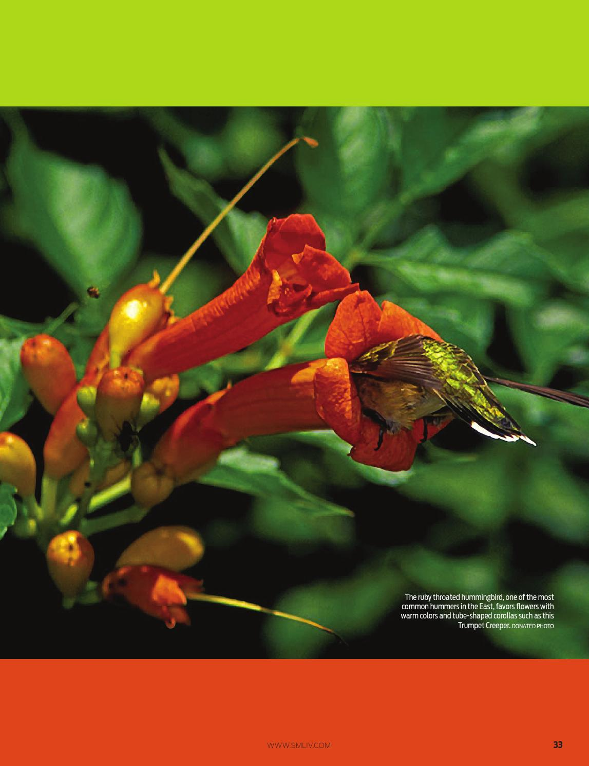 hummingbirds and flowers mutualism