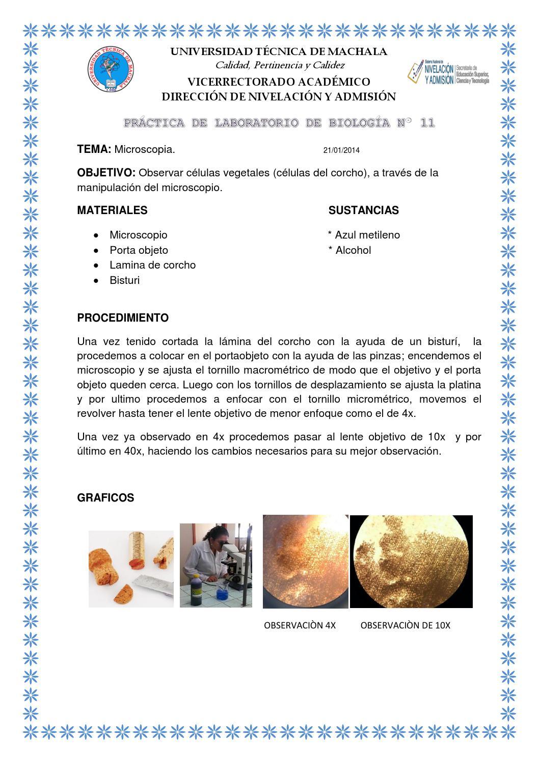 Práctica De Laboratorio De Biología Nº 11 Y 12 By Karol