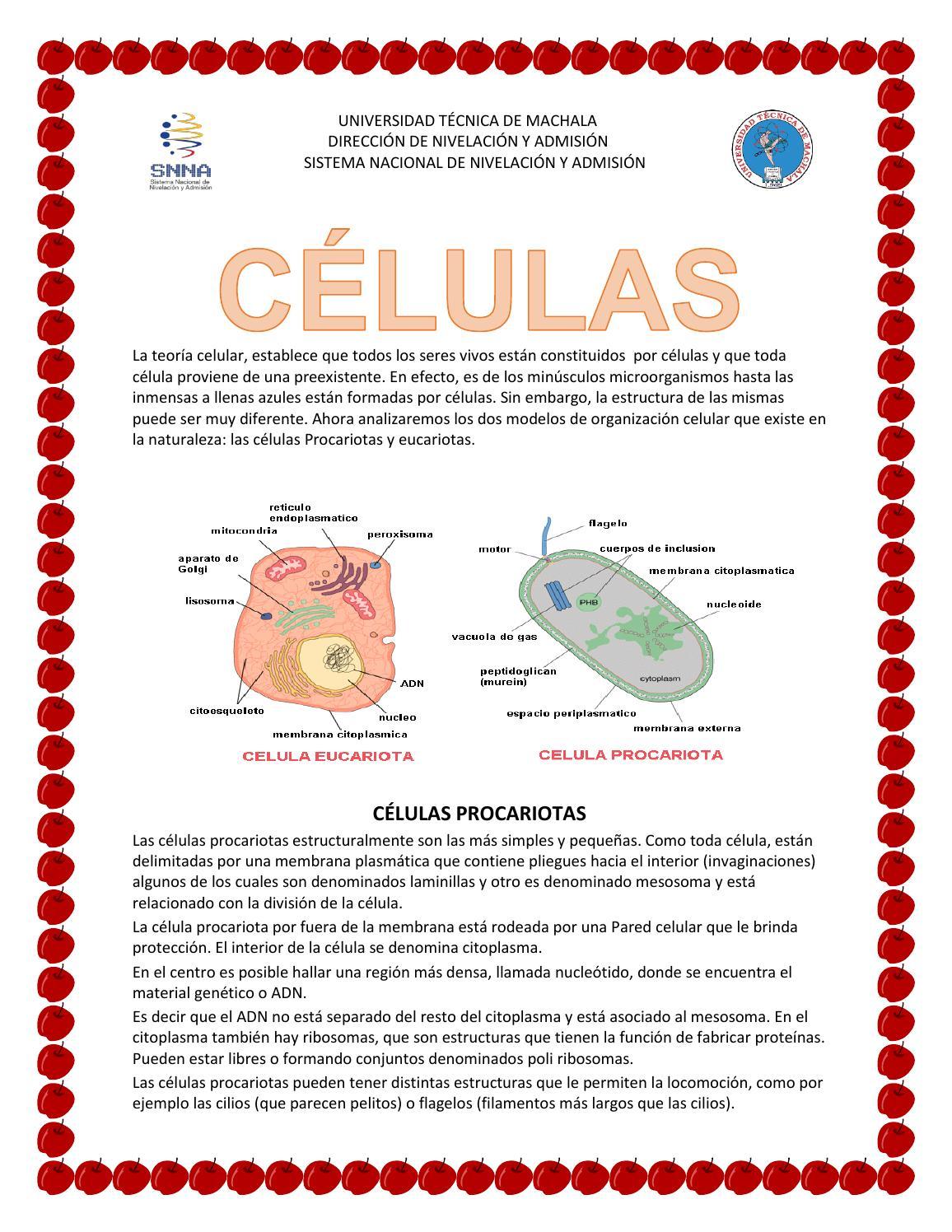 Celulas P Y E By Marisol Baculima Issuu