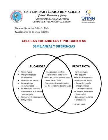 Celulas Eucariotas Y Procariotas Materia By Samy Calderón Alaña Issuu