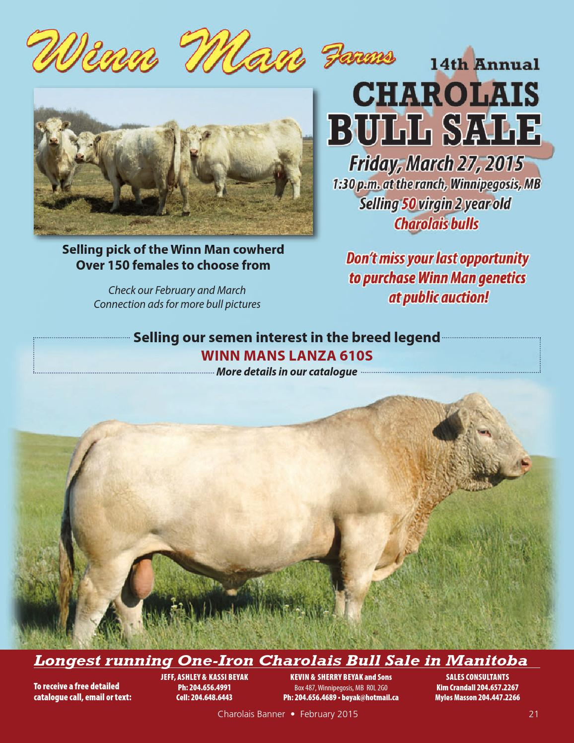 Feb 2015 charolais banner by Charolais Banner - issuu