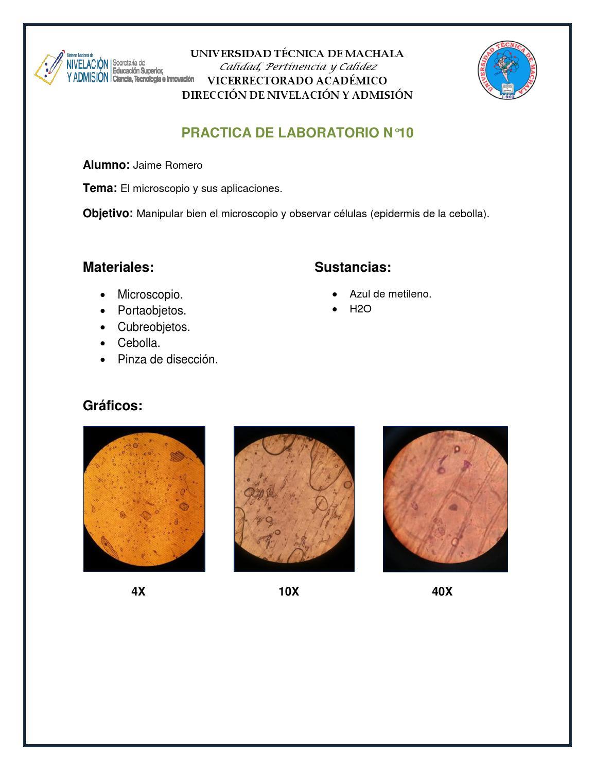 Practica De Laboratorio Cebolla By Un Tal Jaime Romero Issuu