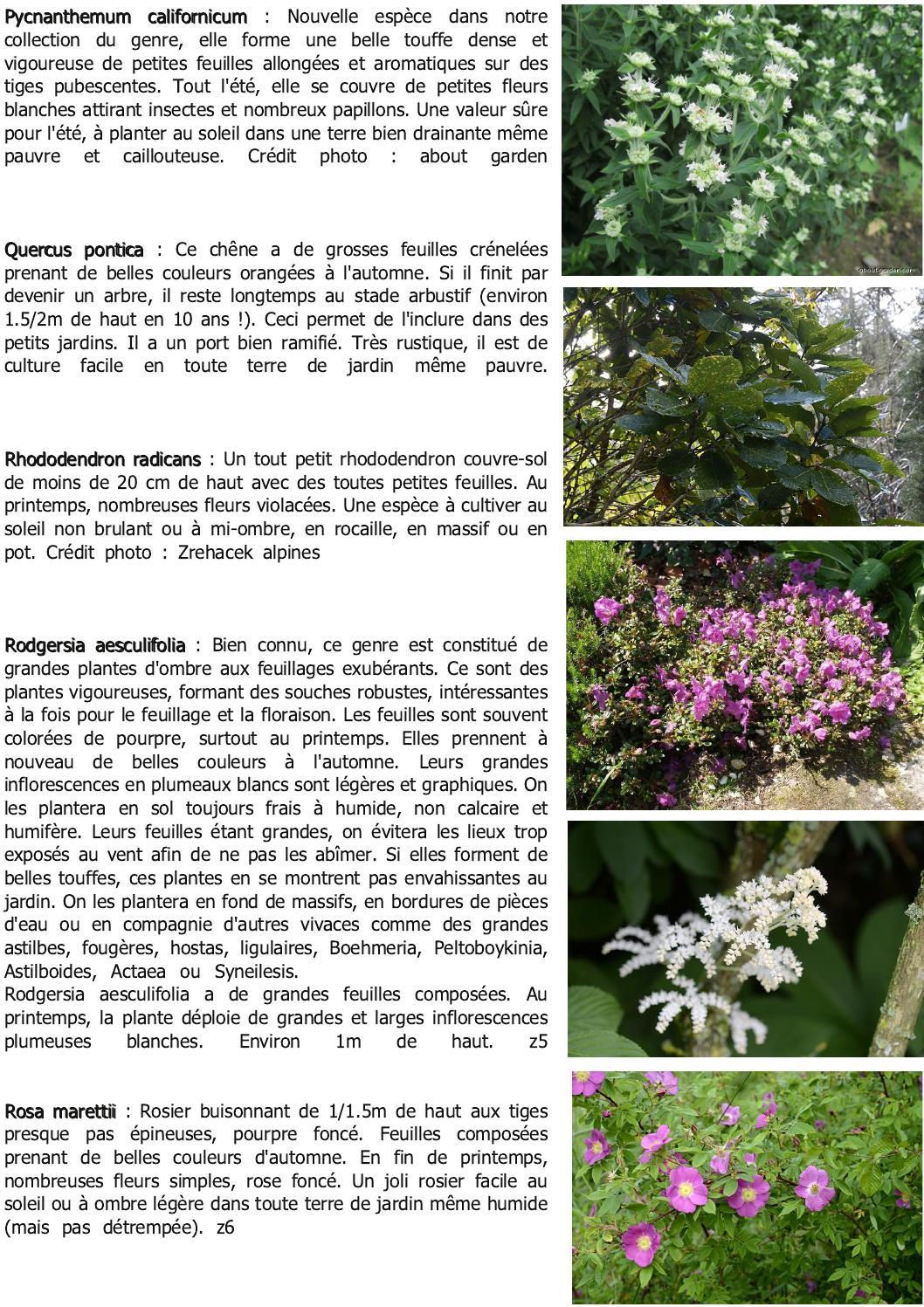 Fleurs Pour Mi Ombre bulletin la n'avette n°3cedric basset - issuu