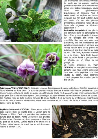 Bulletin la N\'avette n°3 by cedric basset - issuu
