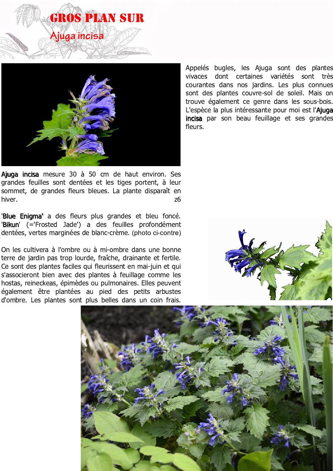 Fleur De Sous Bois Bleue bulletin la n'avette n°3cedric basset - issuu