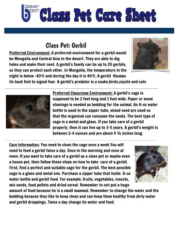 gerbil pet care sheet by anyela ariza techangieariza issuu