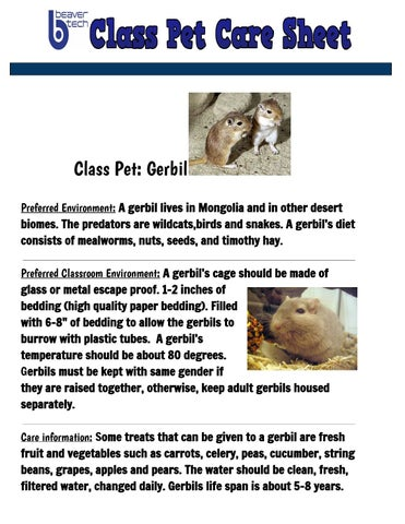 gerbil pet care sheet table 3 by anyela ariza techangieariza issuu