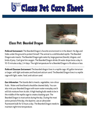 bearded dragon pet care sheet by anyela ariza techangieariza issuu