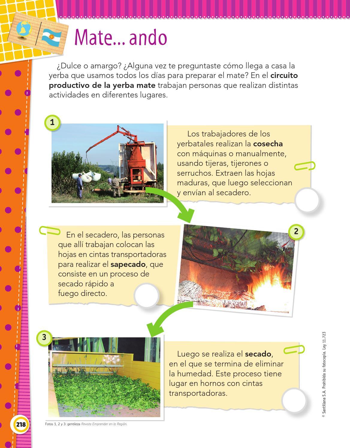 Circuito Productivo De La Yerba Mate : El gato sin botas by maría candelaria pagella issuu