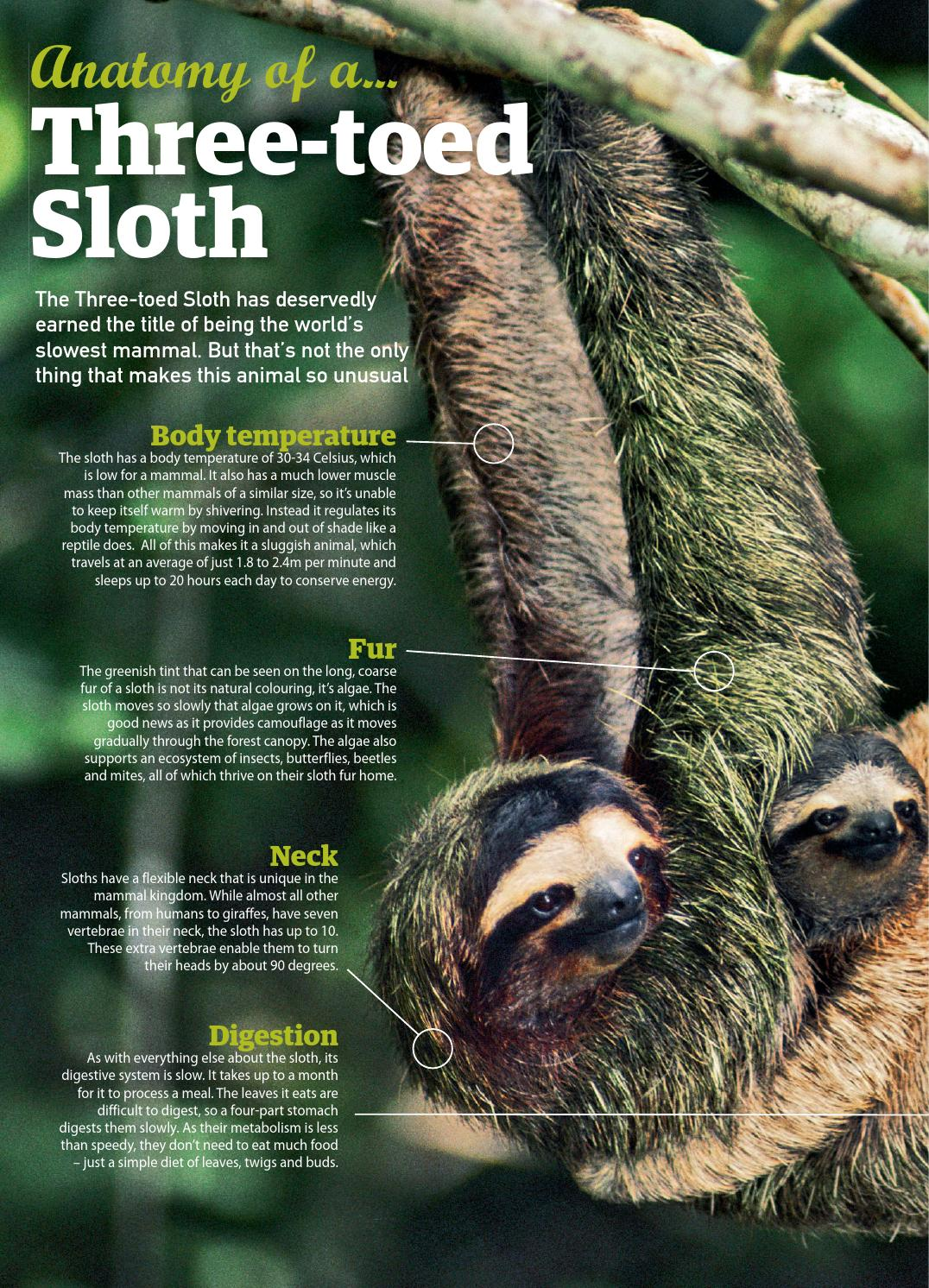 Contemporary Anatomy Of A Sloth Sketch - Anatomy and Physiology ...