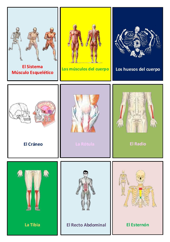 Loteria sistema musculo esqueletico r by Roger Santos Dominguez - issuu
