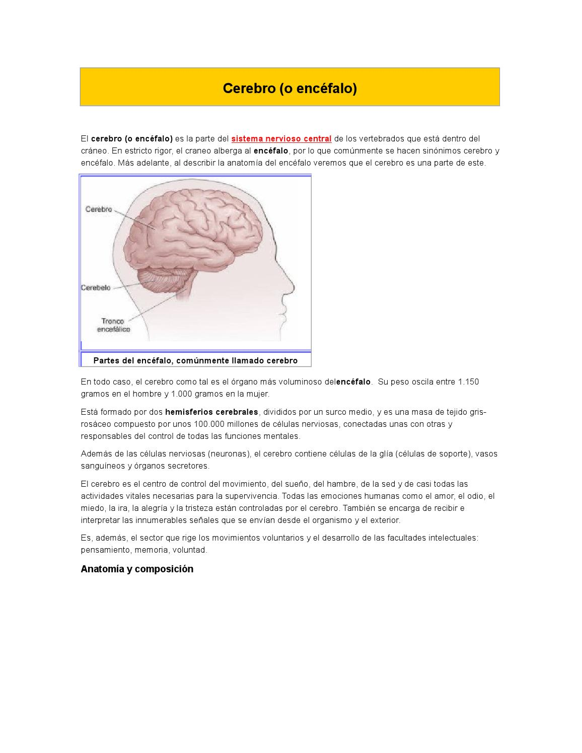 Cerebro by daniela santos - issuu