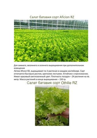 выращивание салата гидропонике фото