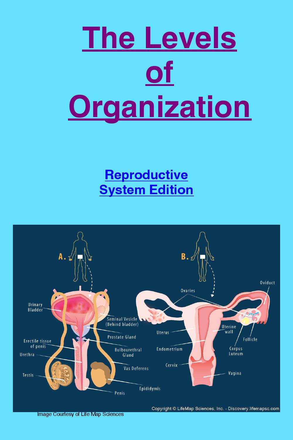 The Levels Of Organization Of The Reproductive System By Deepa
