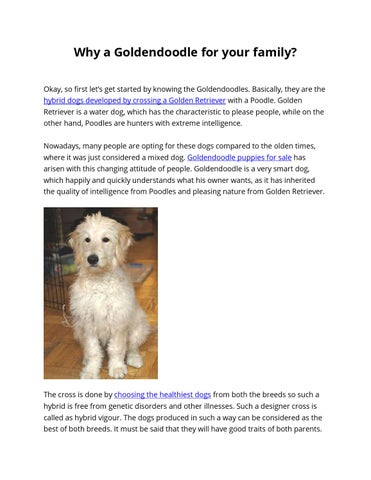 Why a Goldendoodle for your family? by Golden Doodle