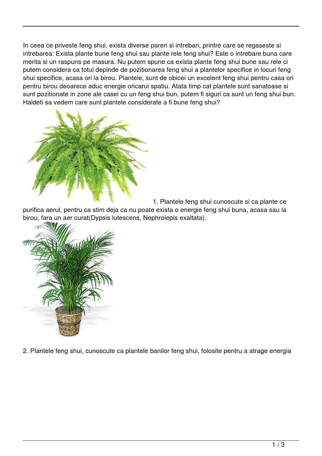 exista plante bune feng shui sau plante rele feng shui by. Black Bedroom Furniture Sets. Home Design Ideas