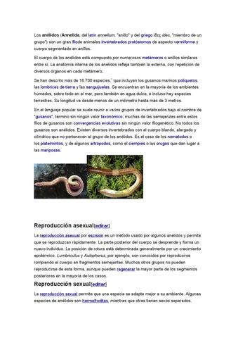 Los anelidos by danielovich 10 - issuu