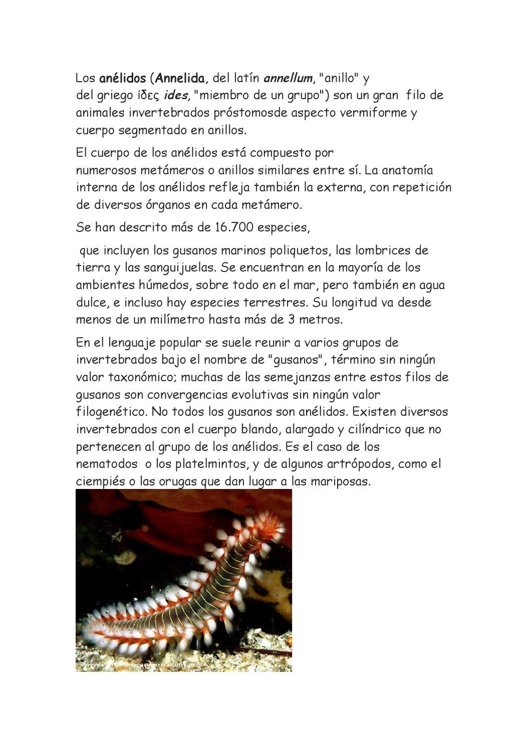Los anelidos issuu by danielovich 10 - issuu