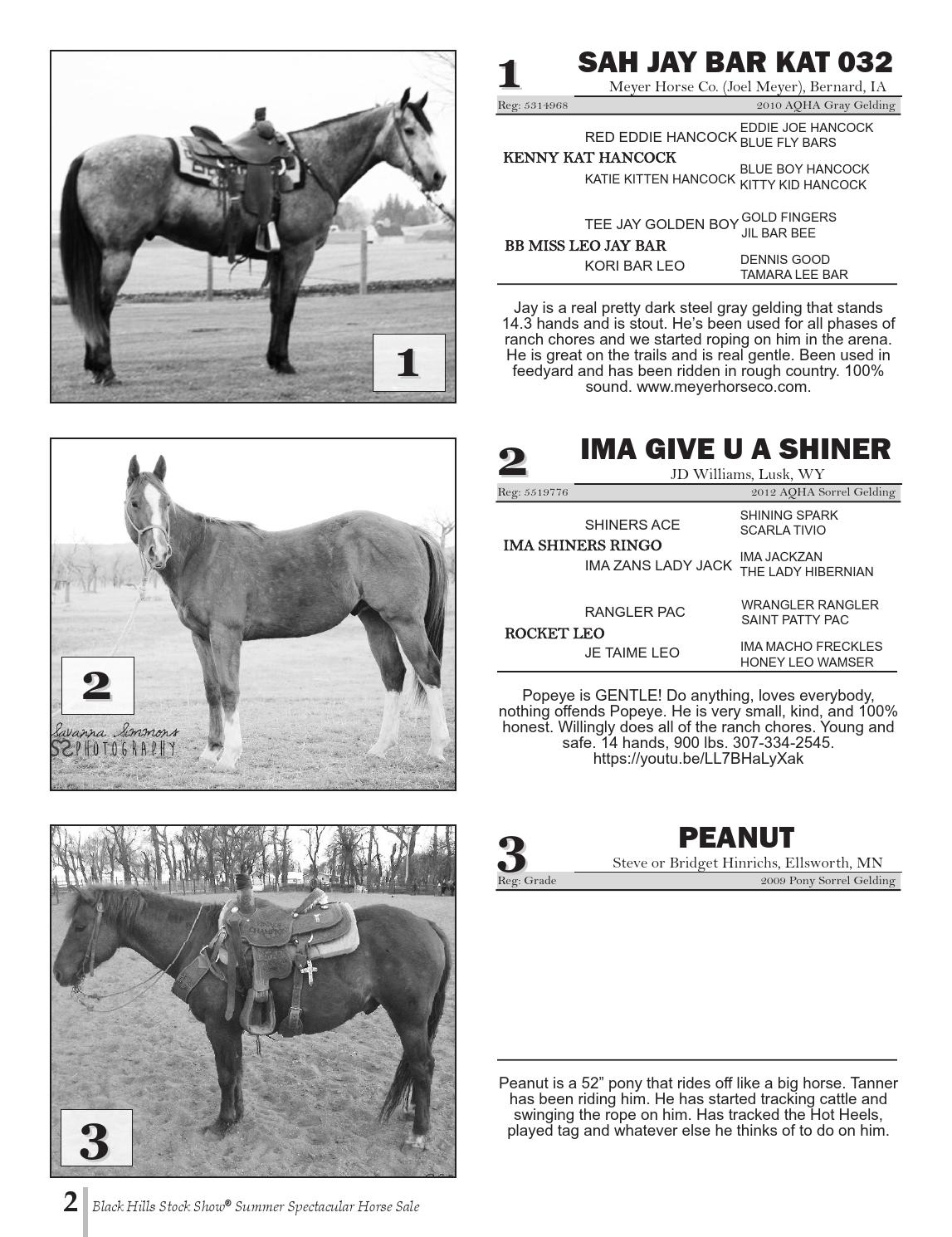 Csf june horse sale by RPI Promotions - issuu