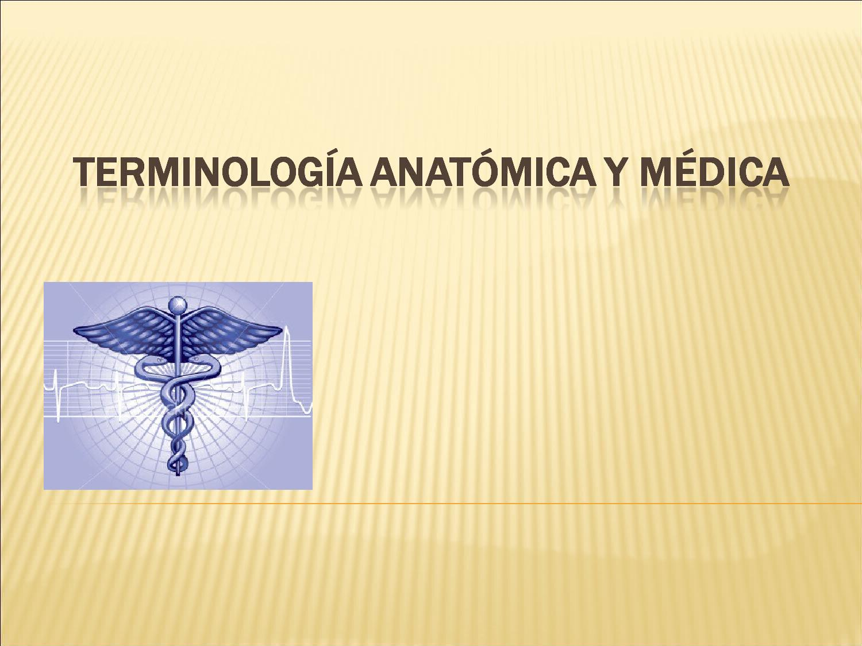 Terminologia anatomica y medica by Angela Salazar Osorio - issuu
