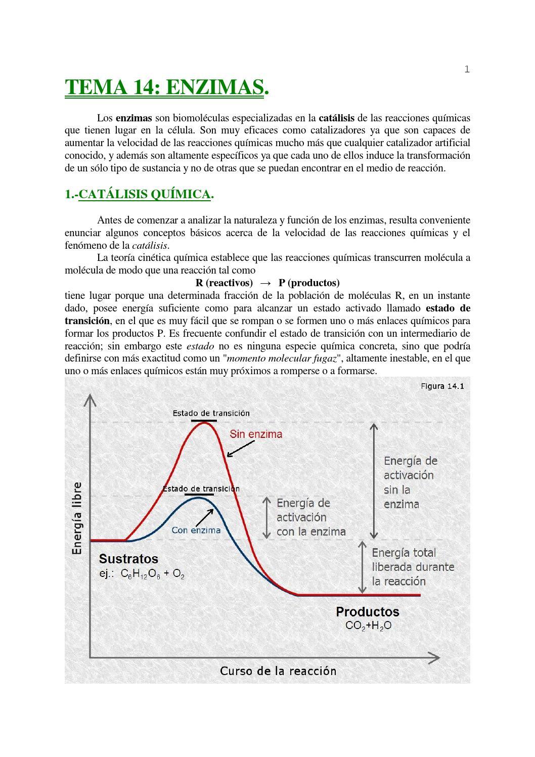 Enzimas repartido by clasesparticulares en montevideo issuu for Que significa molecula
