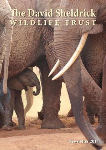 9e64f116cdedf DSWT Annual Newsletter 2014 by Sheldrick Wildlife Trust - issuu