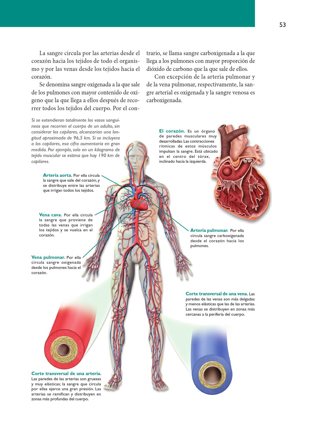 Huellas-Biología4 by Macmillan Publishers S.A. - issuu