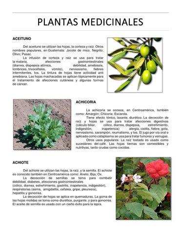 Plantas medicinales by aura lucia issuu for Planta decorativa con propiedades medicinales crucigrama