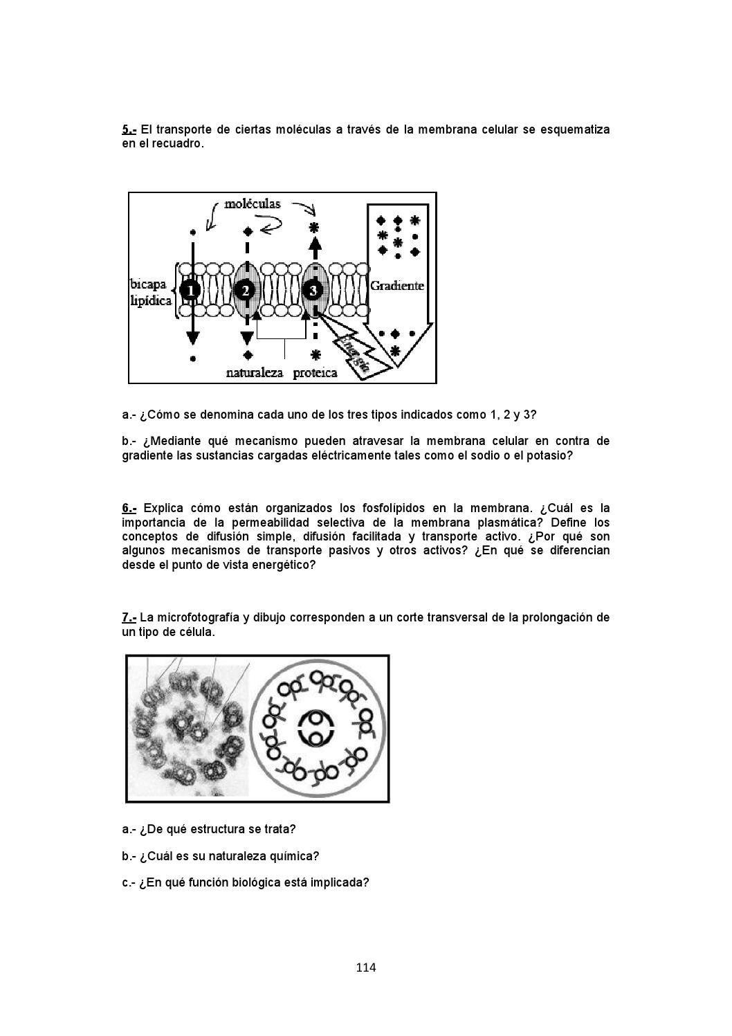Biología Proyecto Mendel By Carricerocomun Issuu