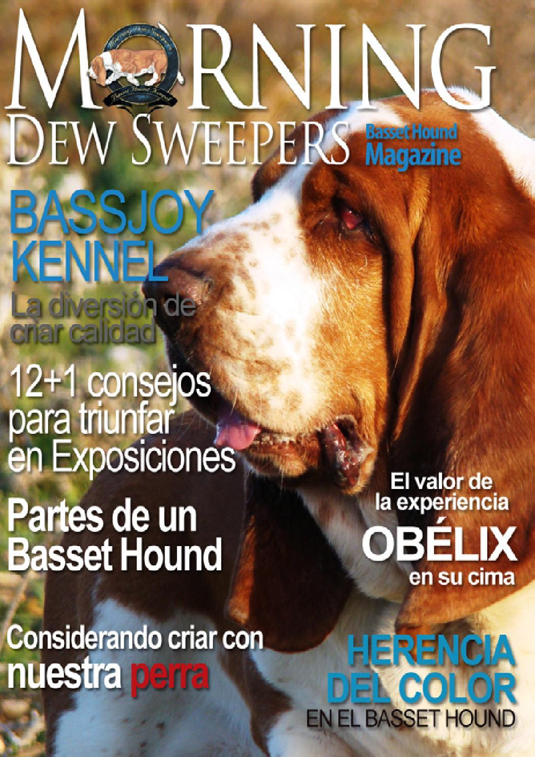 Morning Dew Sweepers Basset Hound Magazine número 1 en español by ...